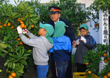 JR八幡浜駅の駅員と一緒にミカンを収穫する園児ら