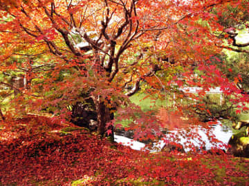 ▲秋の庭園も美しい
