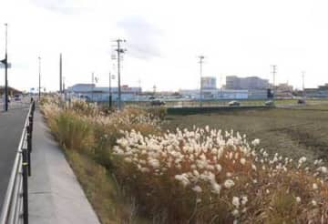 国道8号白根バイパスから見た開発計画地。隣地にはホームセンターなどがある=新潟市南区