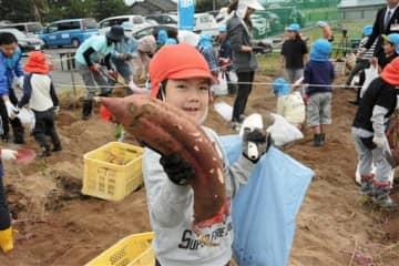 大きなサツマイモを掘り出してよろこぶ園児=八代市