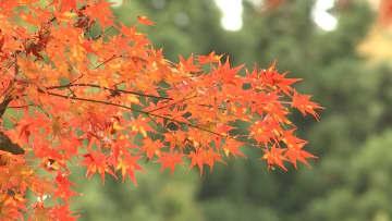 境内の紅葉が見頃 丹波篠山市の高蔵寺