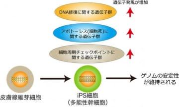 今回の研究の概要。(画像: 東京工業大学の発表資料より)