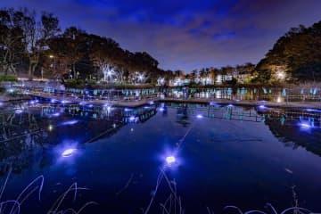 池を光で彩り、願い事の短冊を飾り付ける催し(昨年の様子)=横浜市青葉区のもえぎ野公園