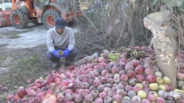 台風19号の難を逃れた奇跡のリンゴ… 全国有数のリンゴ産地「アップルライン」復興のカギに