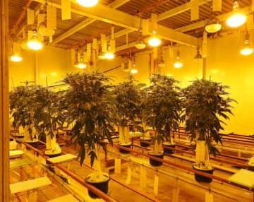 大麻草の栽培が行われていた地下施設(千葉県警提供)