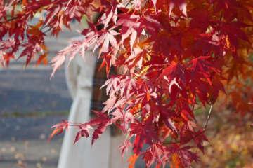 山梨・清里は絶賛紅葉シーズン! 食べ物も豊かで満たされる…