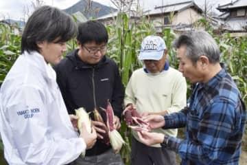 大和農園の担当者(左端)から、もちトウモロコシ栽培の指導を受ける生産者=徳島県東みよし町