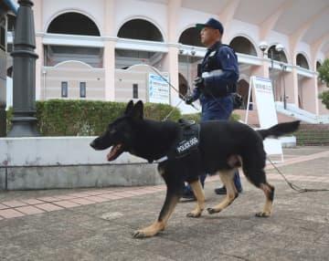 ミサ会場一帯に不審物がないか調べる警察犬=長崎市、県営ビッグNスタジアム