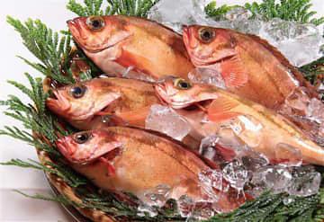 中泊町で漁獲されたウスメバル。近年、漁獲が好調に推移している(同町提供)