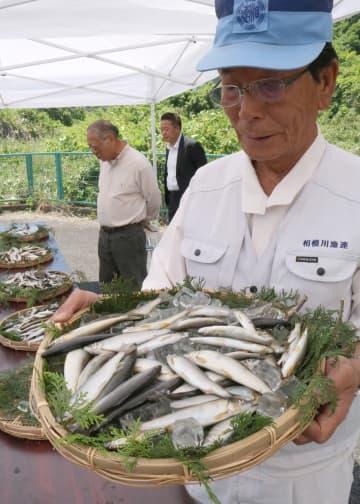 釣り上がったアユを手にする木藤代表理事会長 =愛川町半原の相模川漁業協同組合連合会事務所