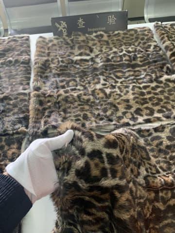 絶滅危惧種マーゲイの毛皮6枚を押収 上海税関