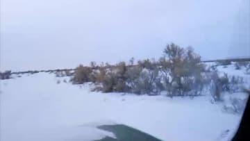 野生のモウコノウマ一家に子馬4頭誕生 新疆アルタイ地区