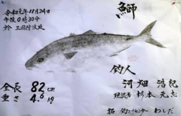 河畑さん(坂井市)が釣ったブリの魚拓