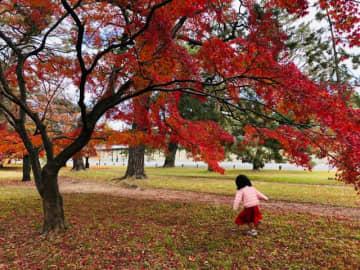 緑の芝生に真っ赤な紅葉が美しい
