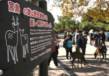 宮島のシカは「野生動物」と伝え、関わり方への注意を促す看板