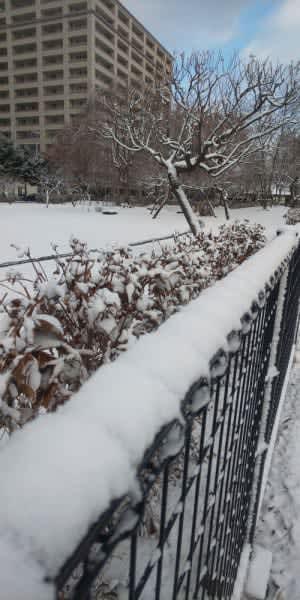 厳しい冷え込みとなった盛岡市内=6日午前8時30分ごろ、同市本町通