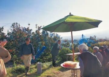 都心から参加したツアー客が柿もぎを体験した