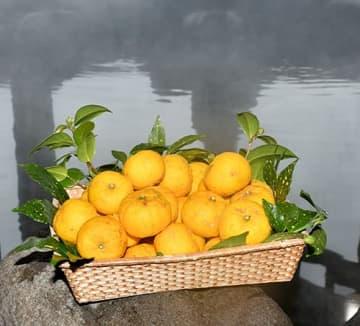 男女の露天風呂と内風呂に8日、ユズ(手前)を浮かべる=大江町・柳川温泉