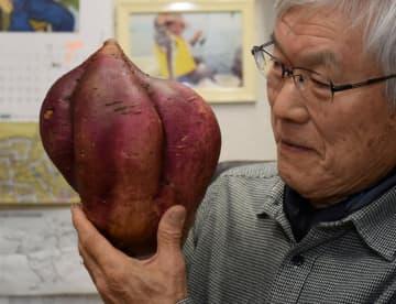 5個のがくっつくような不思議な形のサツマイモ(長岡京市奥海印寺)