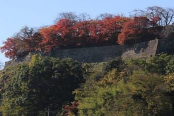 修復を予定している津山城跡二の丸の東側石垣