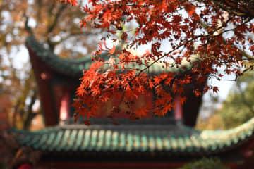 色とりどりの風景を堪能 岳麓山の紅葉が見頃 湖南省長沙市