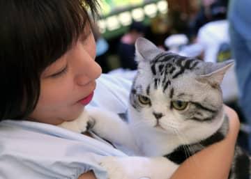 中国人のペット関連消費、今年は2千億元突破へ