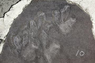 ジュラ紀の恐竜足跡化石、避暑山荘で多数発見 河北省承徳市