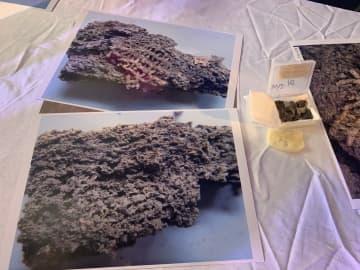 中国で5千年以上前の養蚕の痕跡見つかる 研究者が解明