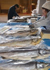 室蘭産のサケを使った「山漬け」を仕分けする室蘭漁協関係者。14日から販売される