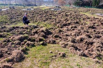 イノシシにより芝生の大部分が掘り起こされている芋煮広場=山形市馬見ケ崎プール「ジャバ」