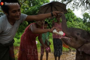 ミャンマー:象の孤児院 画像
