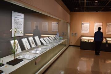 三浦半島の植物を紹介する展示=横須賀市自然・人文博物館