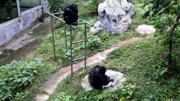 洗濯上手のチンパンジー 重慶市永川区