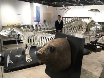 クロミンククジラ(奥)や「みなぞう」の骨格標本の間に立つ安倍館長