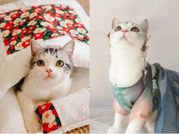「90後」世代の飼いネコも漢服 中国のペット産業の市場規模が拡大