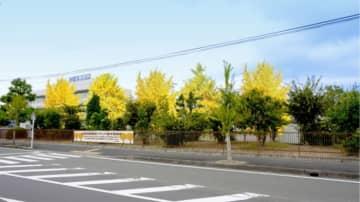 イチョウ並木育成イメージ(画像: グンゼの発表資料より)