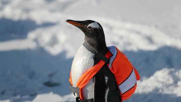 やんちゃなペンギンが屋外で大はしゃぎ ハルビン