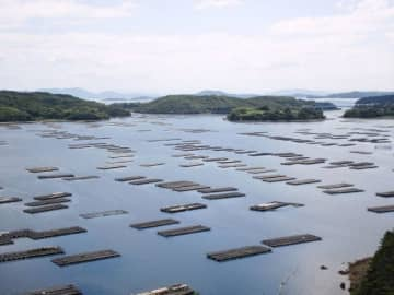 「MSC認証」を取得した瀬戸内市邑久町のカキ漁場。海面にはカキいかだが浮かぶ