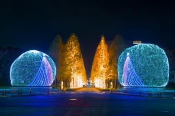 古都の夜を鮮やかに彩る、ローム本社周辺のイルミネーション。見事なメタコイア並木は、京都の冬の風物詩になっている。