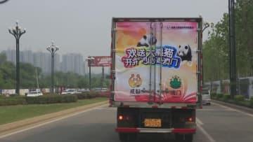 マカオ、中国内地とのパンダ保護協力が新たな段階へ