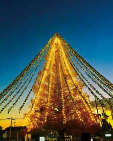 5万枚以上のメッセージタグを飾り付け、ライトアップされた「メタセコイア」(守山市提供)