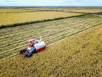 中国の農業技術がモザンビークの食糧問題を改善