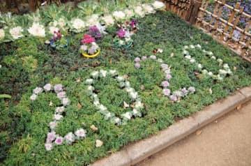 葉ボタン文字で「2020」展示場では春の七草展も@川崎市緑化センター