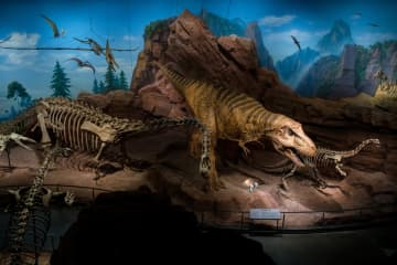 澄江化石地自然博物館、2020年に一般公開 雲南省玉渓市