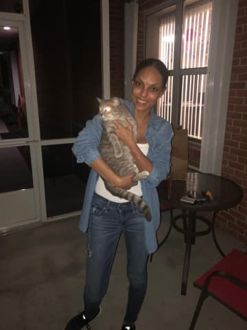 A cat found by in Hillsborough County was reunited with its owner after going missing in 2017 during Hurricane Irma. - Hillsborough County Sheriff's Of/Hillsborough County Sheriff's Of/TNS