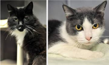 Julie, left, and Raz are the only two pets available for adoption at the Southern Ocean County Animal Shelter in Manahawkin as of Dec. 31, 2019. (Provided/)