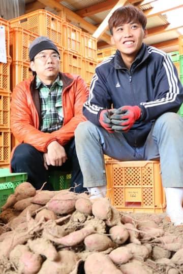 収穫したサツマイモの根をカットする作業に取り組むズイさん(右)と、佐藤代表=五島市三井楽町