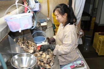 特定技能の在留資格でカキ打ち作業場で働く孫さん(呉市)