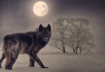 """The first full moon of 2020 is known as the January """"wolf moon."""" (Photo illustration   Pixabay/)"""