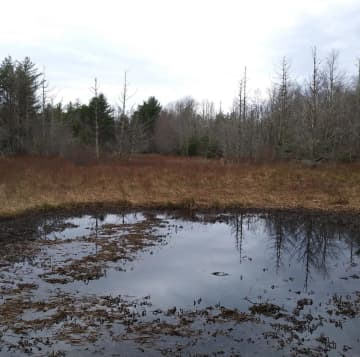 Foothills Conservancy of North Carolina says it bought a rare 17-acre Southern Appalachian Mountain Bog in Burke County to protect the site from development. - Foothills Conservancy of North C/Charlotte Observer/TNS